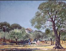 Paesaggio a Corfù